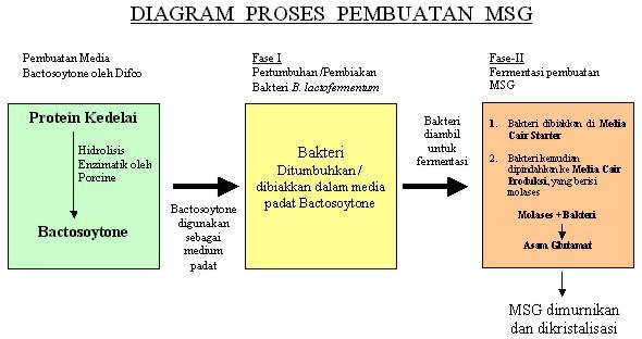 proses produksi msg  monosodium glutamat