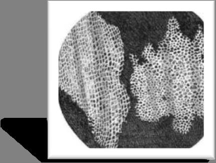 Iyah shahab sejarah dan perkembangn mikroskop
