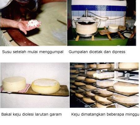 Nama bakteri yang dimanfaatkan untuk pembuatan atau pengolahan makanan ...