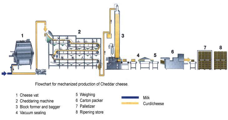 Pemanfaatan mikroorganisme di bidang pangan berbasis bioteknologi b ccuart Choice Image