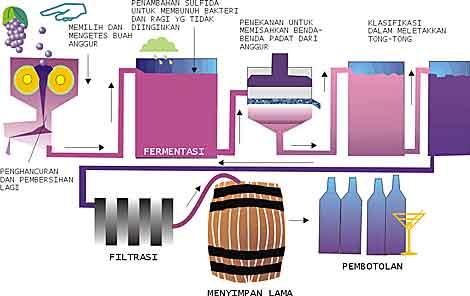 Nama bakteri yang dimanfaatkan untuk pembuatan atau pengolahan gambar proses pembuatan wine proses fermentasi ccuart Image collections